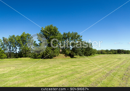 summer field and trees stock photo, nature, season, landscape and environment concept - summer field and trees by Syda Productions