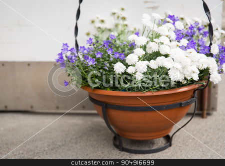 beautiful flowers in pot outdoors stock photo, gardening, flowers, decoration and flora concept - beautiful bellflowers and chrysanthemums in pot outdoors by Syda Productions