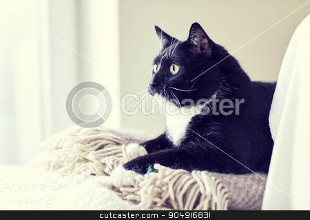 black and white cat lying on plaid at home stock photo, pets, domestic animals and comfort concept - black and white cat lying on plaid at home by Syda Productions