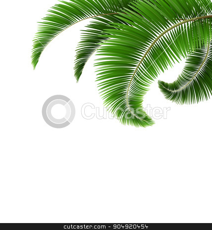 Green Palm Tree Leaves Isolated on White stock vector clipart, Green Palm Tree Leaves Isolated on White Background by Makkuro_GL