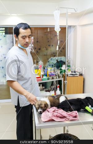 veterinarian care illness puppy in veterinary clinic ,Thailand stock photo, veterinarian care illness puppy in veterinary clinic ,Thailand by stockdevil