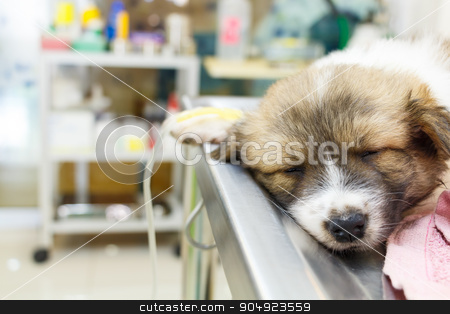 illness puppy with intravenous drip on operating table stock photo, illness puppy with intravenous drip on operating table in veterinarian's clinic by stockdevil