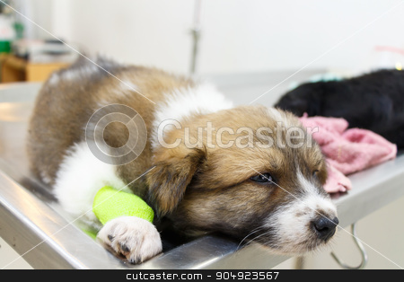 illness puppy(Thai Bangkaew Dog) with catheter at its leg stock photo, illness puppy(Thai Bangkaew Dog) with catheter at its leg on operating table in veterinary clinic by stockdevil
