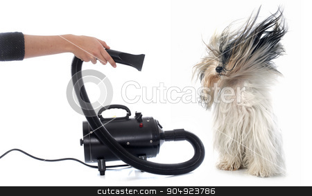 Hair dryer for dog stock photo, Hair dryer for dog in front of white background by Bonzami Emmanuelle