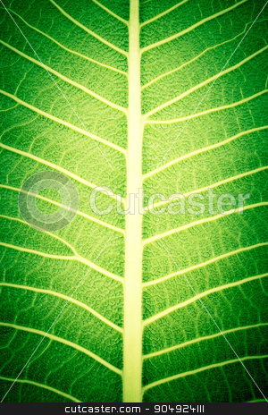 texture of leaf stock photo, texture of leaf by stockdevil