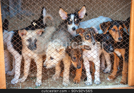 Many cute puppies locked in the cage stock photo, Many cute puppies locked in the cage. Russia. by agnormark