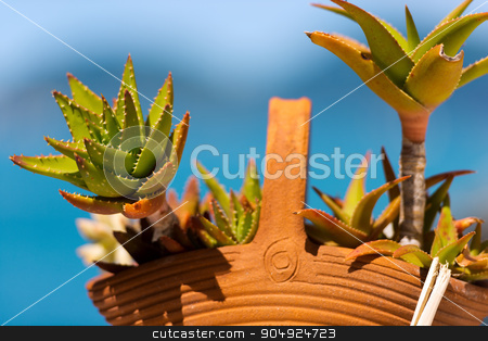 Aloe Vera in Clay Pot - Liguria stock photo, Detail of old aloe vera plant in clay pot on a blue blurred background. Liguria, Italy by catalby