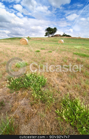 Cut meadow landscape stock photo, Cut meadow with straw and trees in the background. by richpav