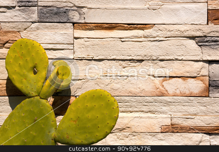 Green Cactus on white Wall Stones stock photo, Detail of old cactus on a white and brown stone wall by catalby