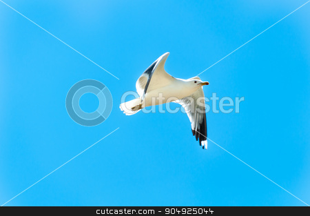 Flight for Free stock photo, Seagull frozen in mid flight through a summer sky by Daniel Stewart