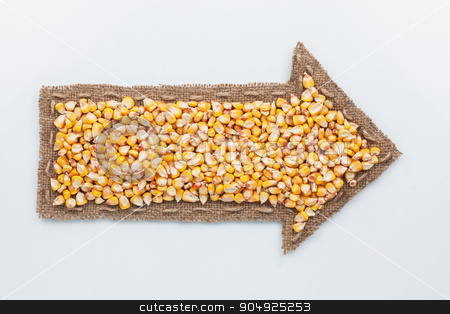 Pointer with corn  grains stock photo, Pointer with corn  grains, on white background by alekleks