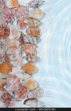 Line of sea shells in the water stock photo, Line of sea shells in the water, with space for your text  by alekleks