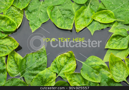 Of lilac leaves in water  stock photo, Of lilac leaves in water with space for your text by alekleks