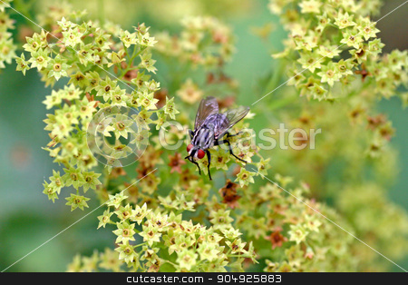 A Fly stock photo, A fly with red eyes sitting on a plant by Lucy Clark