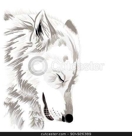 Wolf's face stock vector clipart, Sketch of a wolf's face,on white background by ElemenTxD