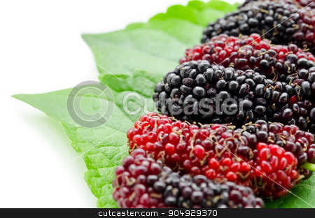 Mulberry with green leaf. stock photo, Mulberry with green leaf isolated on white background by Miss. PENCHAN  PUMILA