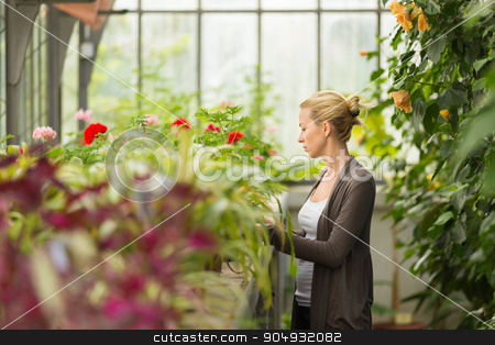 Florists woman working in greenhouse.  stock photo, Florists woman working with flowers in a greenhouse.  by kasto