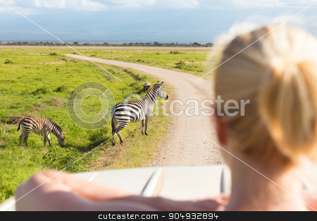 Woman on african wildlife safari. stock photo, Woman on african wildlife safari observing zebras from open roof safari jeep. Rear view. Focus on zebras. by kasto