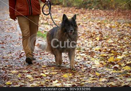 Man with German shepherd stock photo, Man with old German shepherd by Dariusz Miszkiel