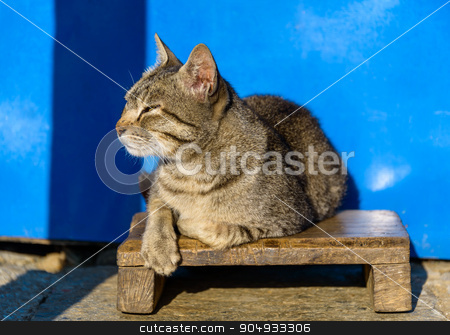 Cat basking in the sun stock photo, Cat basking in the sun, blue wall background, in Nepal by Dutourdumonde