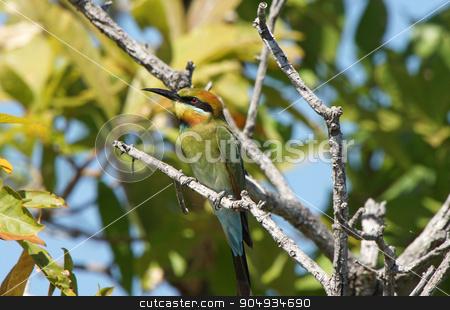 Rainbow bee-eater, Australia stock photo, Rainbow bee-eater, Kakadu National Park, Australia by Alexander Ludwig