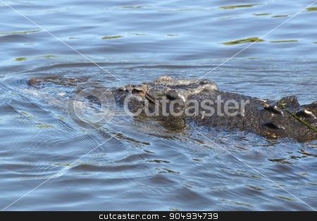 Saltwater Crocodile, Australia stock photo, Saltwater Crocodile, Kakadu National Park, Australia by Alexander Ludwig