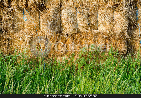 Straw and fresh grass stock photo, Golden straw and fresh green grass by Attila Toró