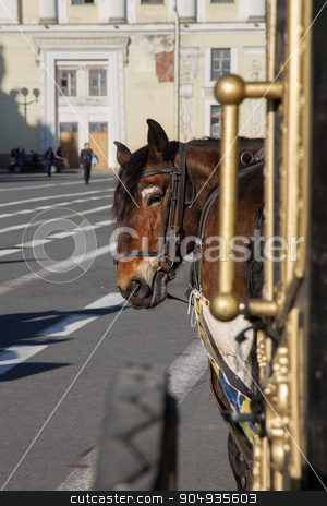 A horse harnessed to a carriage on the square stock photo, A horse harnessed to a carriage on the square by Ksenija