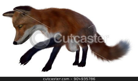 Red fox searching- 3D render stock photo, Red fox searching isolated in white background - 3D render by Elenarts