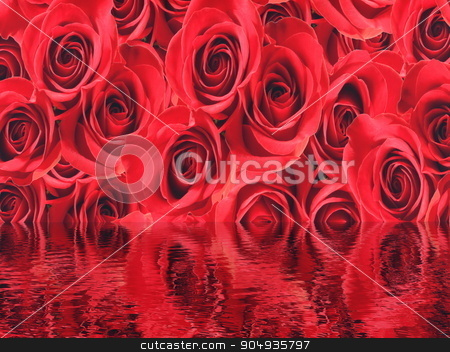 Red roses background stock photo, Red beautiful roses background with water reflection by Elenarts