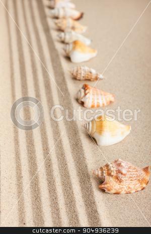 Stripe of seashells lying on the sand  stock photo, Stripe of seashells lying on the sand ,can be used as background  by alekleks