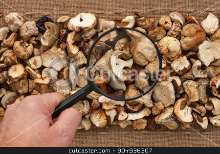 Man's hand with magnifying glass over mushroom  stock photo, Man's hand with magnifying glass over mushroom  and burlap by alekleks