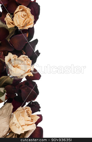 Dried roses  stock photo, Dried roses isolated on white background by alekleks