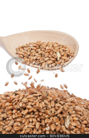 Spoon of wheat stock photo, Wheat is poured from the wooden spoon by alekleks