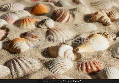 Closeup seashells sticking out of the sand in the sunlight stock photo, Closeup seashells sticking out of the sand in the sunlight, as background  by alekleks