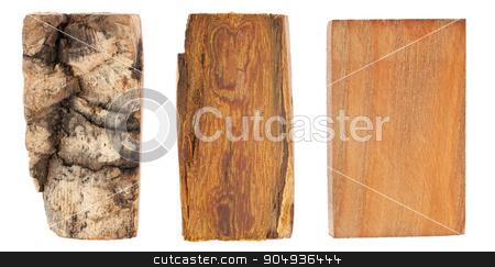 The bark and wood of amur velvet stock photo, The bark and wood of amur velvet, isolated on white by alekleks