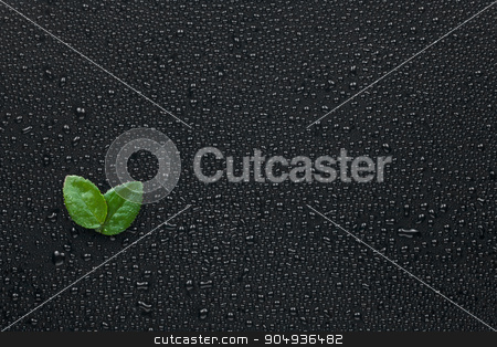 Two leaf lying on the wet black background stock photo, Two leaf lying on the wet black background, can be used as background by alekleks