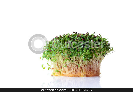 Sprouted alfalfa seeds stock photo, Sprouted alfalfa seeds on white background by sutike