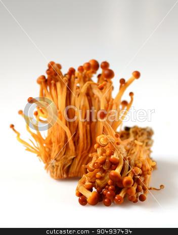 Shimeji mushrooms on white stock photo, Fresh Shimeji mushrooms on a white background by sutike
