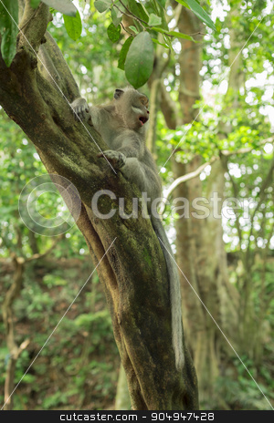 Wildlife wild monkey tree jungle environment stock photo, Wild monkey on tree with surprised face expression, natural jungle environment background.  by Cienpies Design