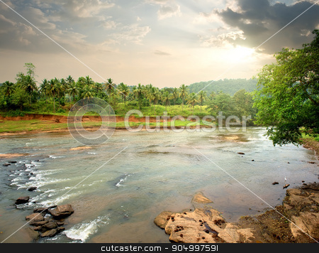 River in jungle stock photo, River in jungle of Sri Lanka at sunset by Givaga