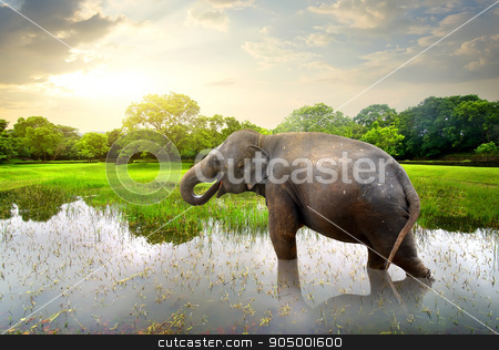 Elefant in pond stock photo, Elefant, bathing in lake near green trees by Givaga
