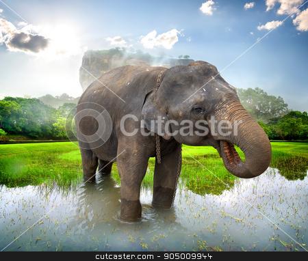 Elephant near Sigiriya stock photo, Elephant in a pond near mountain of Sigiriya by Givaga