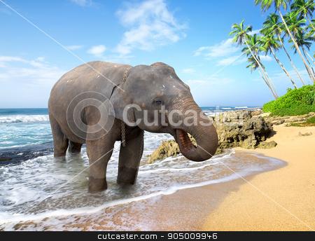 Elephant on the beach stock photo, Elephant, standing on a beach near the ocean by Givaga