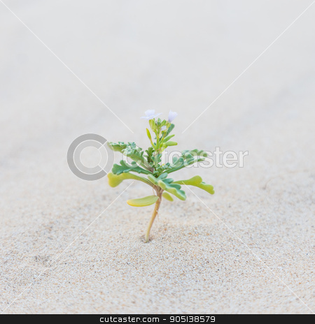 Single sprout blooming in desert sands. stock photo, Single sprout blooming in desert sands. New life concept.  by kasto