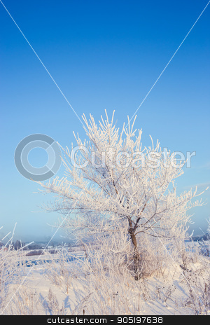 Winter tree in a field with blue sky stock photo, Winter tree in a field with blue sky. landscape. frost by Kopytin Georgy