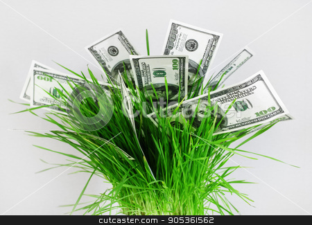 Money in grass stock photo, Money in grass. Many one hundred dollar bills in a pot with green grass on a gray background. Fake money. Business concept. by Veresovich