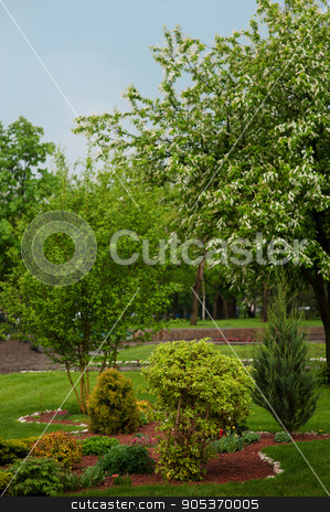 summer landscape design park with trees and plants stock photo, summer landscape design park with trees and plants by timonko