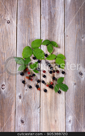 Organic wild blackberries on stressed wooden boards  stock photo, Overhead view of wild blackberries and leafs on rustic wooden boards in vertical format. by tab62