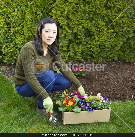 Flower Planting  stock photo, Asian women with box of mixed flowers in flowerbed with green bushes in background by tab62